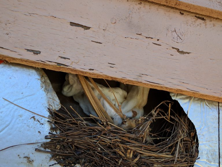 Image result for bird's nest in siding